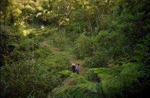 《野雀之詩》小翰與祖母走在樹林裡